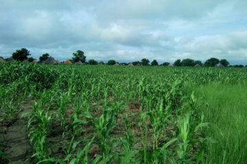 Providing insecticides